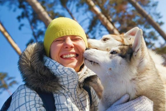 One-Hour Alaskan Dog Sledding Tour