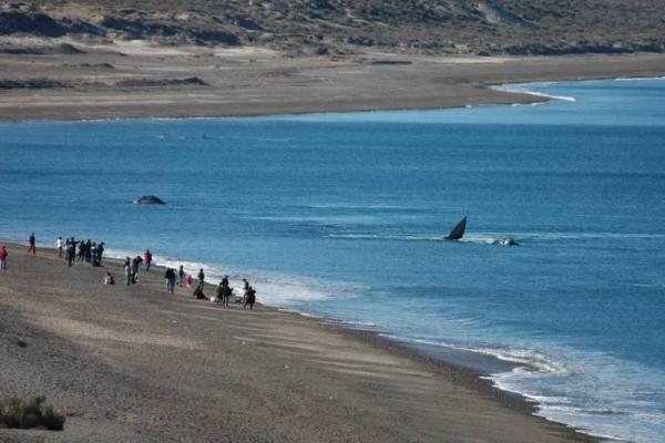Peninsula Valdes, Puerto Piramide & Punta Cantor Sightseeing Tour