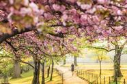 2-Day Washington, D.C. Cherry Blossom Tour**With Philadelphia, Princeton University & Amish Village**