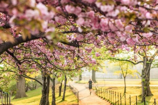 2-Day Washington, D.C. Cherry Blossom Tour**With Philadelphia, Princeton University & Newseum**