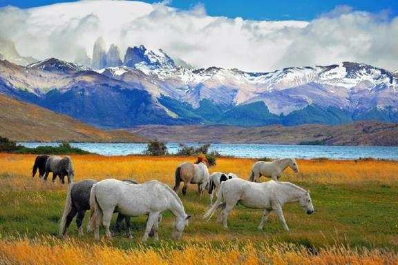 Full Day Torres del Paine National Park Tour
