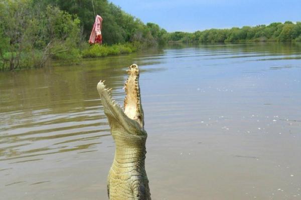 Jumping Crocodile River Cruise