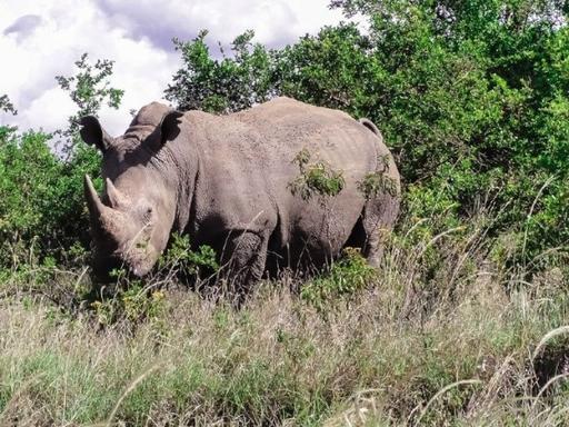 Nairobi National Park, Karen Blixen Museum, & Giraffe Center Tour