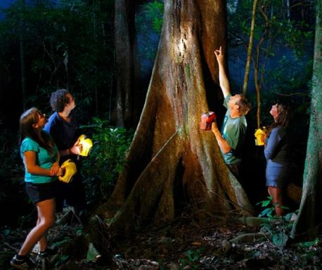 Daintree Rainforest Night Tour