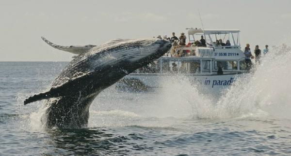 Moreton Island & Tangalooma Wrecks Cruise