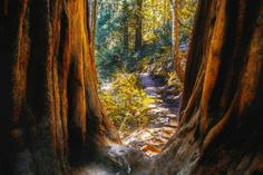 tours to muir woods:Muir Woods & Sausalito Expedition