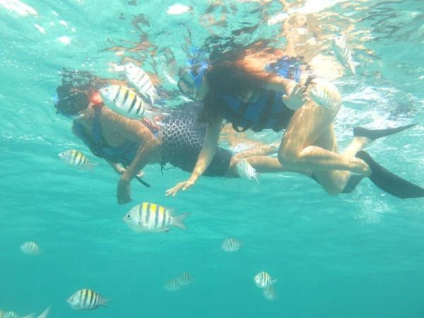 Reef Adventure with Lunch