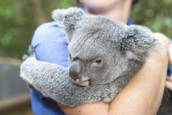 Koalas & Morning Tea Day Trip