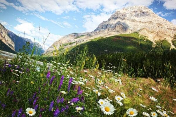 5-Day West Canada Rockies Summer Tour Package: Johnston Canyon, Lake Louise and Columbia Icefield