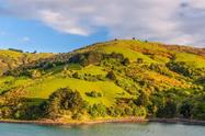 Dunedin Bays, Beaches and Views Tour