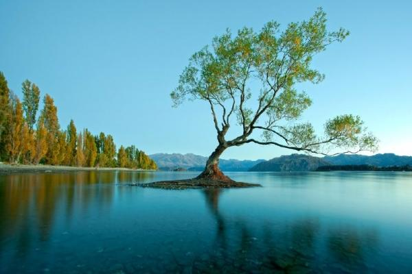 Arrowtown & Wanaka Half-Day Tour