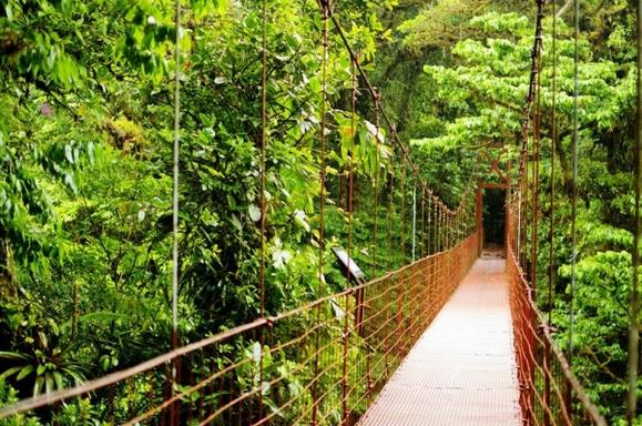 8-Day Best of Costa Rica Bus Tour: San Jose - Tortuguero - Arenal - Monteverde