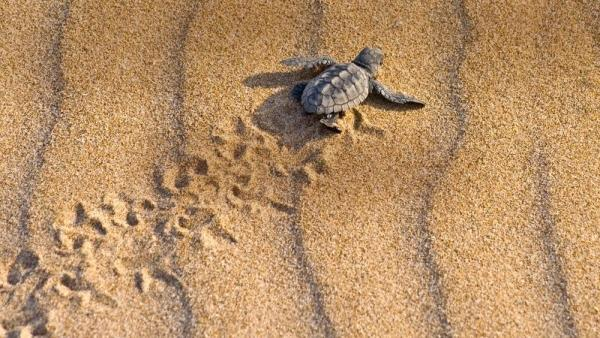 3-Day Costa Rica Tortugeuro Turtles Adventure