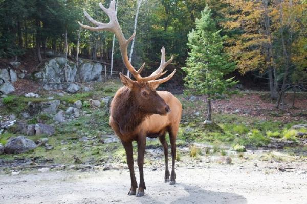 1-Day Parc Omega & Premium Outlets Montreal Tour