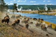 5-Day Yellowstone, Mt Rushmore, Grand Teton National Park Tour Package