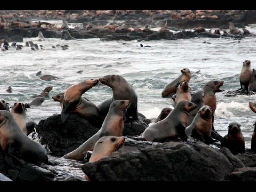 Grand Penguins & Seals Tour W/ Seal Rock Cruise