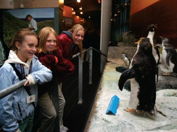 Phillip Island Penguin VIP Tour