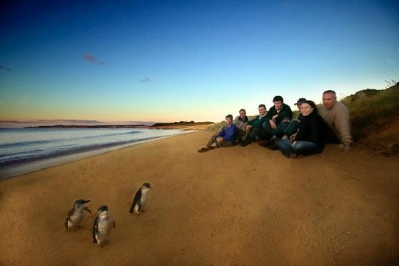 1-Day Phillip Island Penguin Parade & Wildlife Adventure Tour