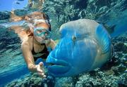 2-Day Magical Great Barrier Reef & Grand Kuranda Combo Tour