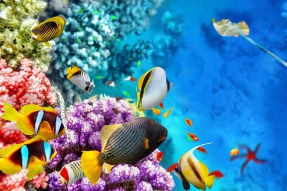 2-Day Great Barrier Reef, Daintree & Culture Tour W/ Passions of Paradise