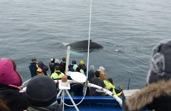 3-Hour Whale Watching Cruise