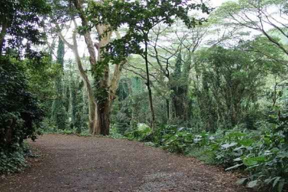 Manoa Valley, Rainforest & Waterfall Day Trip