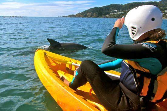 Byron Bay Sea & Rainforest Adventure Tour