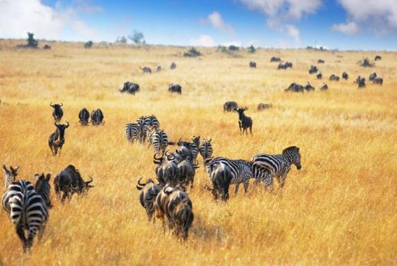 3-Day Classic Masai Mara Budget Tour