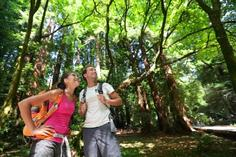 maui sightseeing map:San Francisco and Giant Redwoods Combination Sightseeing Tour