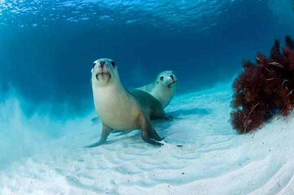Swim With The Sea Lions