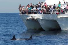 explorer video of dolphin habitat:Port Stephens Dolphin Watching