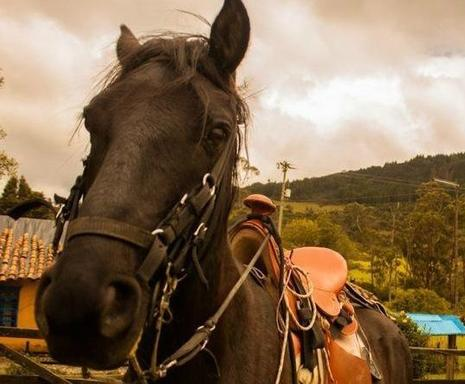 Colombia Highlands Horseback Riding