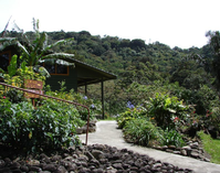 in what state is the petrified forest located:Cloud Forest Chills at Monteverde