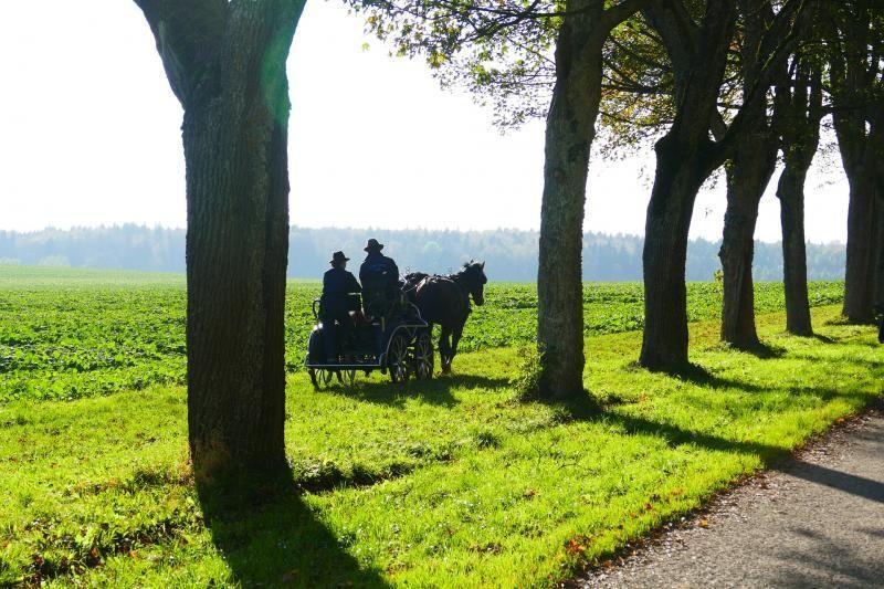Godollo Palace and Farm Visit w/ Horse Show