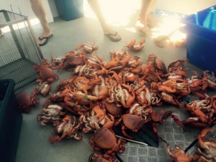 9-Hour Sunshine Coast Deep Sea Fishing Trip