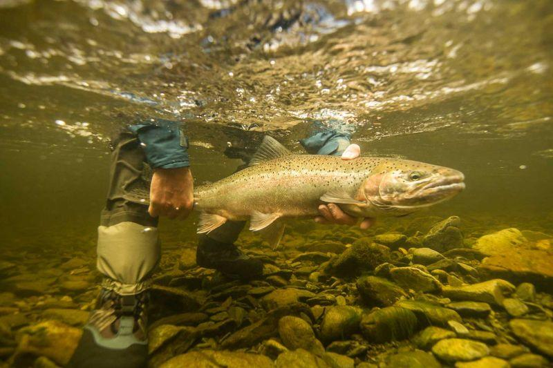 Wild Alaskan Steelhead Fishing Trip
