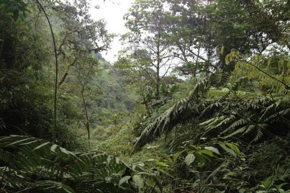 Chorrera & Chiflon Waterfalls Hiking Tour