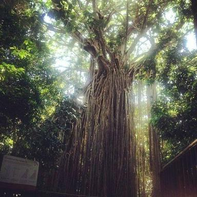 Tableland's Rainforests Day Tour