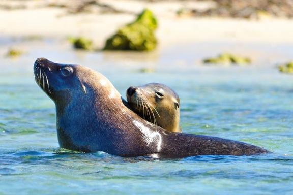 Seal Island Wildlife Cruise