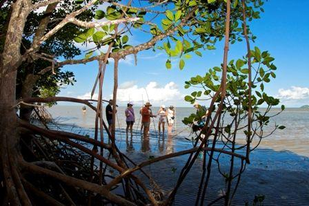 Daintree Dreaming Day Tour