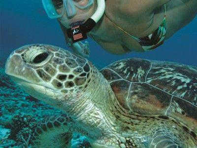 2-Day Great Barrier Reef & Daintree Combination Tour