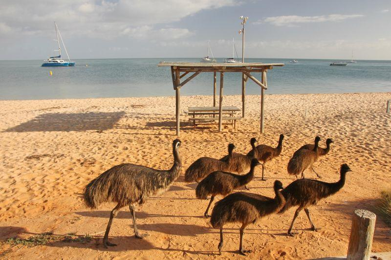 9 Day Perth to Broome One-Way