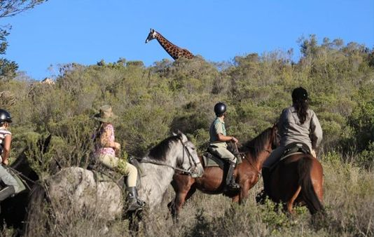 Private Wildlife Safari Day Tour from Cape Town