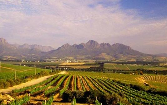 Full Day Cape Town Winelands Tour