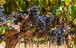 Cape Town Private Winelands Tour