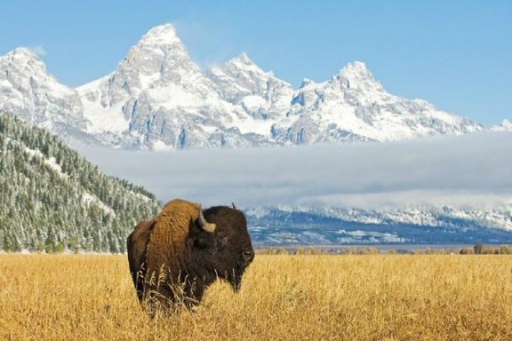 2-Day Deluxe Yellowstone & Grand Teton from Jackson Hole