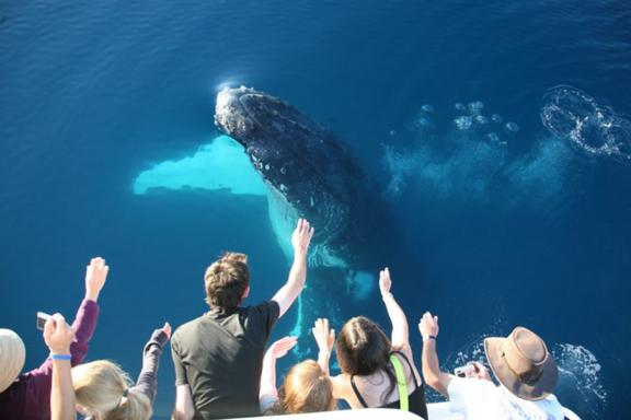 Unique Fraser Island and Whale Watching Tour Package