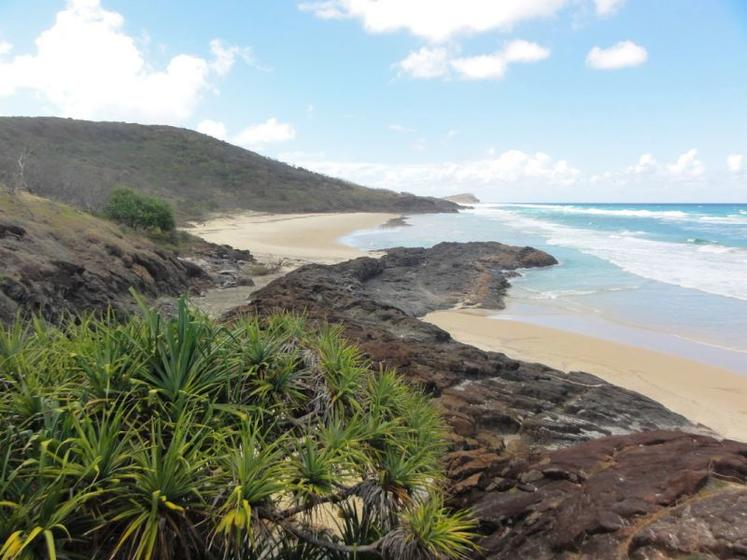 Premium Fraser Island Tour and Whale Waching Package
