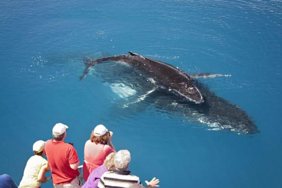 Lady Elliot Island Day Trip and Whale Watching Package