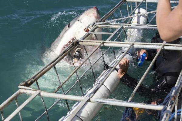 Gansbaai Cage Diving with Sharks from Cape Town
